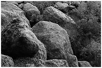 Boulders and trees in Bear Gulch. Pinnacles National Park, California, USA. (black and white)
