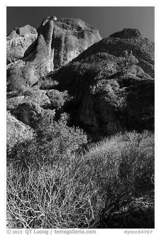 Shurbs and trees in winter below Machete Ridge. Pinnacles National Park (black and white)