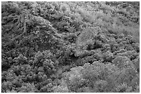 Hillside and rocks in spring. Pinnacles National Park, California, USA. (black and white)
