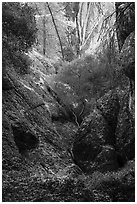 Creek and rocks near Balconies Cave. Pinnacles National Park ( black and white)