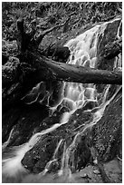 Fern Falls, Jedediah Smith Redwoods State Park. Redwood National Park ( black and white)