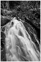 Upper cascades of Fern Falls , Jedediah Smith Redwoods State Park. Redwood National Park ( black and white)