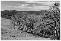 Prairie and oaks in winter near Lyons Ranch trailhead. Redwood National Park ( black and white)