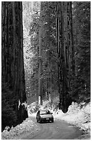 Road and Sequoias in winter. Sequoia National Park, California, USA. (black and white)