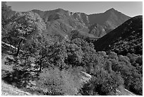 Sierra Nevada western foothills. Sequoia National Park, California, USA. (black and white)