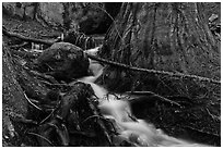 Stream at base of sequoia tree. Sequoia National Park, California, USA. (black and white)