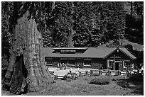 Giant Forest Museum. Sequoia National Park, California, USA. (black and white)