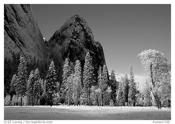 Trees in El Capitan Meadows and Cathedral rocks with fresh snow, early morning. Yosemite National Park, California, USA.