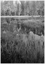 Seasonal pond in spring meadow. Yosemite National Park ( black and white)
