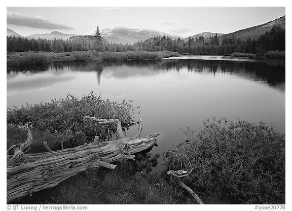 Fallen log and pond, Tuolumne Meadows, sunset. Yosemite National Park (black and white)