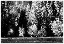 Meadow near Happy isles in spring. Yosemite National Park, California, USA. (black and white)