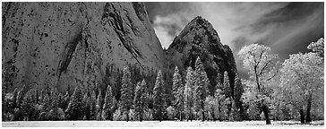 Winter scene with snow-covered trees and Cathdral Rocks. Yosemite National Park (Panoramic black and white)