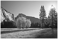 Ahwahnee Meadow with sun shinnig through tree, early morning. Yosemite National Park, California, USA. (black and white)