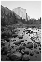 Boulders in Merced River and El Capitan at sunset. Yosemite National Park ( black and white)