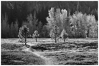 Trail in Sentinel Meadow in autumn. Yosemite National Park, California, USA. (black and white)