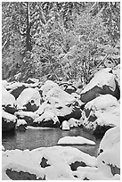 Snow-covered boulders in Merced River and trees. Yosemite National Park ( black and white)
