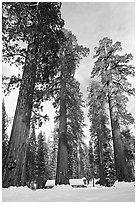 Upper Mariposa Grove and Mariposa Grove Museum in winter. Yosemite National Park, California, USA. (black and white)