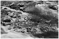 Rapids and shrubs, early spring, Lower Merced Canyon. Yosemite National Park ( black and white)