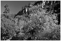 Tree in cliffs, early spring, Lower Merced Canyon. Yosemite National Park ( black and white)