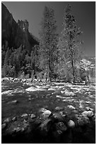 Rostrum, tall trees, and Merced River. Yosemite National Park ( black and white)