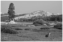 Deer, meadows, and Pothole Dome, early morning. Yosemite National Park, California, USA. (black and white)
