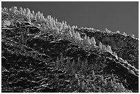Frosted trees on valley rim. Yosemite National Park, California, USA. (black and white)