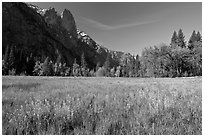 Wildflowers in flooded Cook Meadow,. Yosemite National Park, California, USA. (black and white)