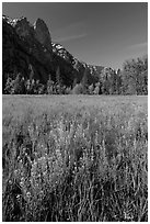 Wildflowers, Cook Meadow, and Sentinel Rock. Yosemite National Park, California, USA. (black and white)
