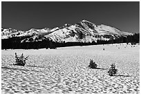 Suncups in Dana Meadow and Mammoth Peak. Yosemite National Park ( black and white)