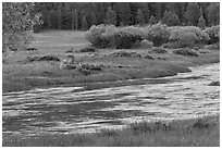 Deer in meadow next to river, Lyell Canyon. Yosemite National Park ( black and white)
