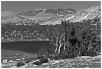 Evelyn Lake and trees. Yosemite National Park, California, USA. (black and white)