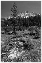 Stream and lush meadow, Lewis Creek. Yosemite National Park ( black and white)