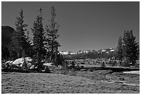 Long Meadow, morning. Yosemite National Park ( black and white)