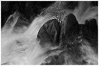 Tree on boulders surrounded by tumultuous waters, Cascade Creek. Yosemite National Park ( black and white)