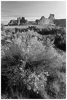 Shrub, cottonwoods and sandstone towers. Arches National Park, Utah, USA. (black and white)