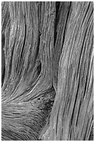 Detail of juniper bark. Arches National Park, Utah, USA. (black and white)