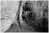 Cliffs and riparian vegetation reflected in stream, Courthouse Wash. Arches National Park ( black and white)