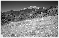 Meadow and distant peak, Mesa inclinado, North rim. Black Canyon of the Gunnison National Park ( black and white)