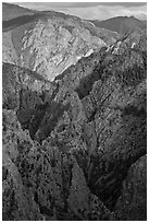 Tomichi Point view, late afternoon. Black Canyon of the Gunnison National Park ( black and white)