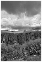 Flowers, canyon, and menacing clouds, Gunnison Point. Black Canyon of the Gunnison National Park ( black and white)