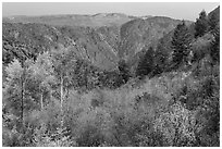 Shrubs and trees in fall color on canyon rim. Black Canyon of the Gunnison National Park, Colorado, USA. (black and white)