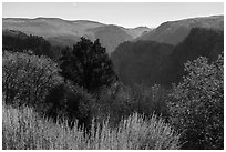 Tomichi Point in the autumn. Black Canyon of the Gunnison National Park ( black and white)