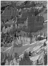 Hoodoos and snow from Sunrise Point, winter sunrise. Bryce Canyon National Park, Utah, USA. (black and white)