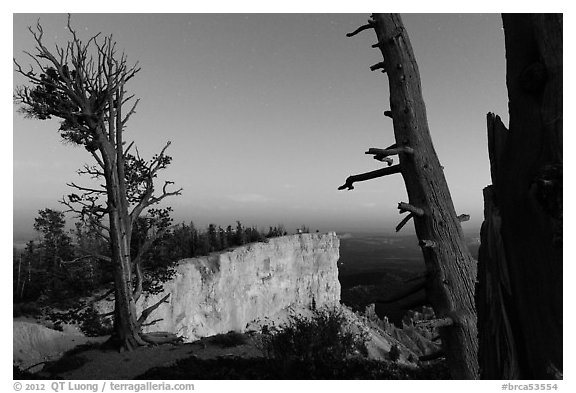 Bristlecone pine trees and cliff at dusk. Bryce Canyon National Park (black and white)