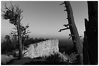 Bristlecone pine trees and cliff at dusk. Bryce Canyon National Park, Utah, USA. (black and white)