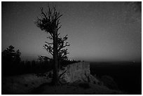 Bristlecone pine at edge of plateau at night. Bryce Canyon National Park, Utah, USA. (black and white)