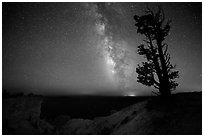 Bristlecone pine and Milky Way near Yovinpa Point. Bryce Canyon National Park ( black and white)