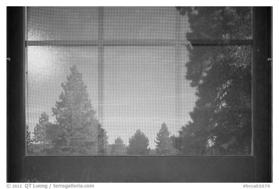 Fir trees, Visitor Center window reflexion. Bryce Canyon National Park, Utah, USA.