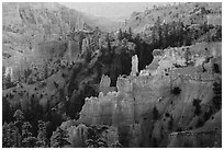 Creamsicle-colored hoodoos and conifers, Fairyland Point. Bryce Canyon National Park ( black and white)