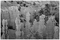 Hoodoos and walls of pinkish siltstone. Bryce Canyon National Park ( black and white)